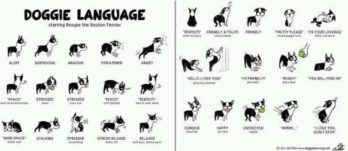 perro, muerde, gruñe, agresividad
