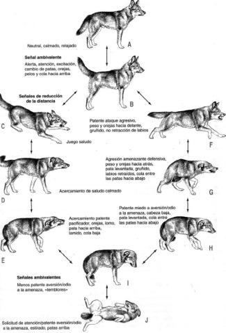 libros para perros, Lenguaje canino, Agresividad