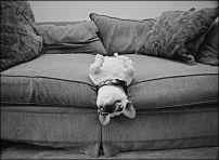 Miperro se sube al sofá, educación canina,