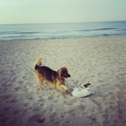 Lenguaje perros, Etología canina