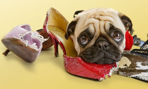 Educador Barcelona, Psicología canina, mi perro se sube al sofá.