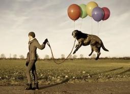 Paseo-perro-correa-educación-canina