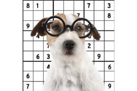 Juguetes interactivos para perros educación canina