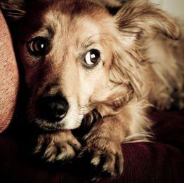 Miedo-Perros-Síndrome Privación Sensorial